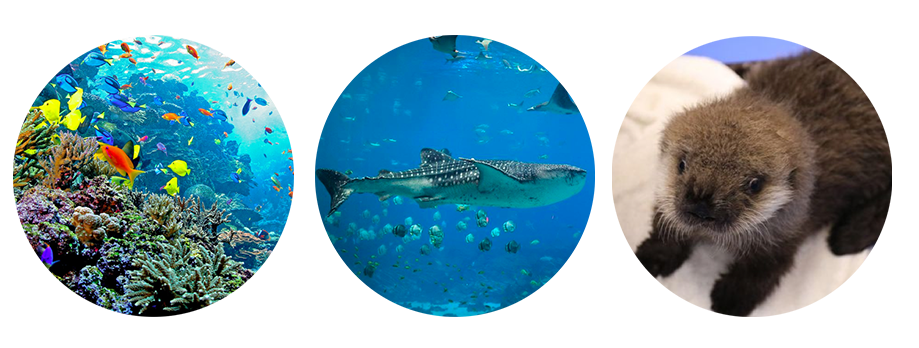georgia-aquarium-images.png